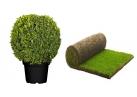 Arbres, plantes, pelouse